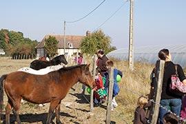 Les poneys aussi nous accueillent avec bienveillance. On voit deux des serres du potager conservatoire.