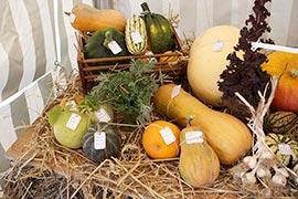 Un vaste stand accueille le public pour y présenter les échantillons de toutes sortes et variétés de légumes. Des courges, des melons, des citrouilles, de l'ail... Pas mal non ?