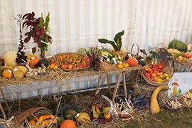 Des tomates, des potirons, des haricots... Les potager de Beaumesnil c'est aussi des pâtissons, des arroches un légume oublié et exquis, qui ressemble aux épinards, des amaranthes, du quinoa...