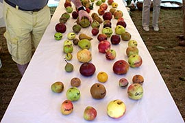 Des pommes, des poires... des dizaines de variétés de pommes ! Et un passionné qui répond à toutes les questions.