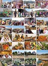 le festival des mille et un légumes : visite d'un potager formidable, en images