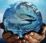La Terre, où la vie est apparue voici environ 4 milliards d'années, est une biosphère, une sphère vivante où tous les organismes se développent et se perpétuent les uns grâce aux autres.