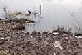 L'érosion des berges est présente tout le long du chemin de halage, emporté par les eaux, jour après jour, année après année, de la halte fluviale jusqu'au pont, au terrain de sport encore en amont et plus loin encore.