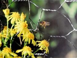 Pétition pour une protection de l'apiculture et des consommateurs face au lobby des OGM - image Ducloz Alexis