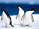 Et si on faisait bosser les pingouins?