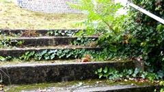 escaliers de Saint-Pierre du Vauvray